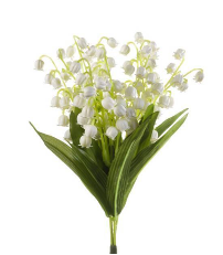 lily of the valley BSIS Symposium 2021